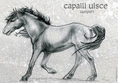 """Art by Tanja Wooten.  Kelpie or """"capaill uisce"""" or """"water horse"""". Somewhat inspired by descriptions of the creatures in The Scorpio Races. 2H and 4B pencil with graphite powder on smooth Bristol paper.  Digital texture background."""