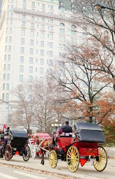 Carriage rides in Central Park, NY, NY