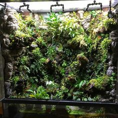 Making an aquascape on your home will help you a lot and it's so fun! Gecko Terrarium, Orchid Terrarium, Aquarium Terrarium, Terrarium Plants, Aquarium Garden, Planted Aquarium, Aquarium Fish, Especie Animal, Animal Room