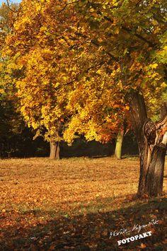 A u nas jesień jest bursztynowa :)  Legnica, park fot. Monika Kasprowiak