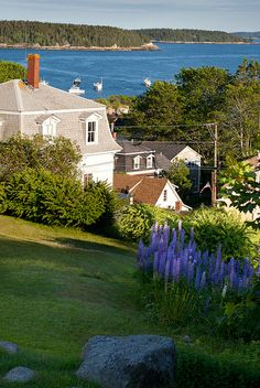 a fine June day with lupine in bloom - Stonington, Maine, USA