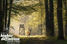 Get outside! #WeAreLegendary www.deergear.com
