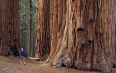 9 California RV Parks for a West Coast Trip | ACTIVE