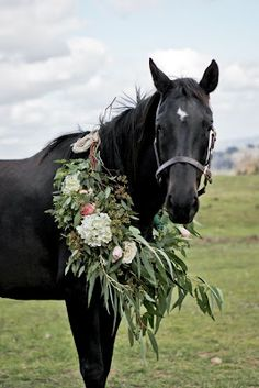 this black horse, obviously.