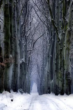 """Snow Forest, Czech Republic photo via retirement"" I've never had a white winter~ Winter Forest, Winter Szenen, Snow Forest, Winter Magic, Winter Road, Forest Path, Winter Walk, Forest Road, Dark Forest"
