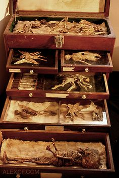 via odditiesoflife: Fairies, Nymphs, & Demons - A Bizarre Collection of Strange Specimens The specimens of Alex CF feature an incredible collection of cryptozoology. His page features amazing stories behind his collection that include descriptions of demons, fairies, nymphs, and other assorted oddities. His pieces are for sale.