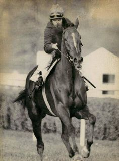 DAHLIA (USA) Ch f 1970, Vaguely Noble (Ire) - Charming Alibi. Foaled in a glittering year for champion foals....Secretariat, Allez France, Forego, Aldaniti, Bletchingly and Leilani among them.....Dahlia did most of her racing in Europe before returning to the US as a 6yo to complete her career. She died on 6 April 2001 at the grand age of 31.
