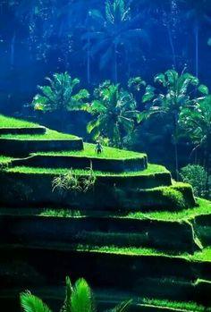 Rice Terraces near Sebatu, Bali, Indonesia Blaine Harrington Photography Oh The Places You'll Go, Places To Travel, Places To Visit, Wonderful Places, Beautiful Places, Voyage Bali, Vida Natural, Rice Terraces, Bali Travel
