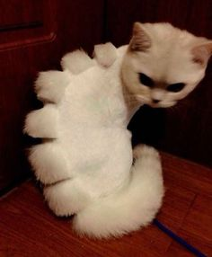 if shaving your cat, turn them into a cat dinosaurs, but he's doesn't look too happy about it.  #funnypics #cats