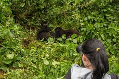 4-days-gorilla-safari-rwanda
