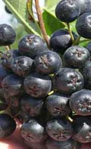 center Blueberry, Fruit, Food, Berry, Essen, Meals, Yemek, Blueberries, Eten