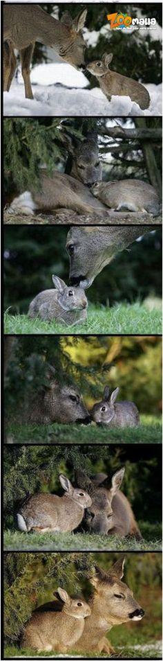 #lievre #rabbit #bunny #bambi #picoftheday #animalerie #zoomalia