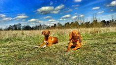 Lovely dogs!