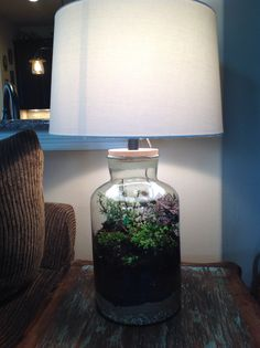 Fillable lamp terrarium. Love it! Just finished making two!