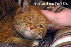 Sam is available for adoption at the New Hampshire SPCA. Please read Sam's  story here http://www.facebook.com/media/set/?set=a.104122173797.92029.49705278797=3#!/photo.php?fbid=10150891915153798=a.104122173797.92029.49705278797=3