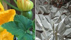Kávézacc a kertben? 4 módon is felhasználhatjuk! Plants, Organic Gardening, Organic Gardening Pest Control, Garden, Garden Pests