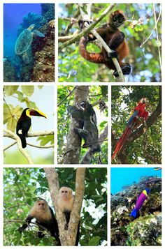 Costa Rica has an abundance of wildlife that attracts many visitors from around the world. Popular wildlife that can be seen are monkeys, sloths and turtles. Read our Costa Rica wildlife watching guide to find out when and where you can see these animals http://mytanfeet.com/about-cr/costa-rica-wildlife-best-places-see/
