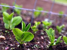 How to Garden: Organic Gardening from the Ground Up! Deft a do!!!