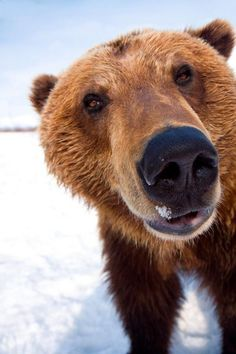 Bear Close-up - hello there! ...