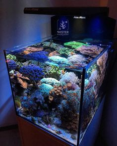 The Nano Reef Blueprint, a transparent guide on keeping a successful saltwater aquarium or nano reef. Marine Aquarium Fish, Coral Reef Aquarium, Saltwater Aquarium Fish, Tropical Aquarium, Saltwater Tank, Nano Aquarium, Glass Aquarium, Nano Reef Tank, Reef Tanks
