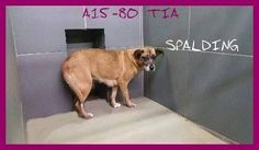 Spalding County Animal Shelter Page Liked · January 28 · Edited ·    A15-80 TIA SHEPHERD MIX FEMALE LAST DAY FEB 2 Location: Griffin, GA PAST LAST DAY, CAN GO DOWN AT ANY TIME