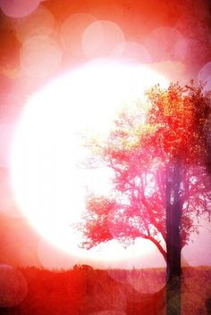 watercolor red tree and big white sun