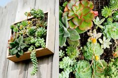 Wall mounted succulents http://elledecoration.co.za/files/2011/11/boxgarden-3.jpg