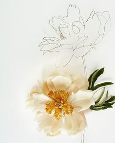 Flower  Flower Drawing (love the idea of having both there, one colour - one grayscale)