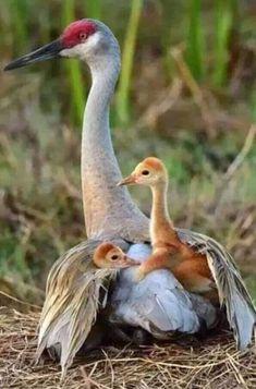 Exotic Pets 794463190503460738 - Source by nellymarmasse Pretty Birds, Love Birds, Beautiful Birds, Animals Beautiful, Beautiful Pictures, Exotic Birds, Colorful Birds, Exotic Fish, Exotic Pets