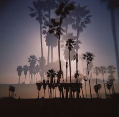 Starting point is Venice Beach. Goodbye palm trees and boardwalk! #volvojoyride