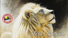 In this fine art TV show episode Steve Morvell is interviewed with Colour In Your Life about painting, drawing, art workshops, art tips and art techniques. Art Tips, Animal Paintings, Painting Techniques, Your Life, Pastels, Wildlife, Fine Art, Colour, Drawings