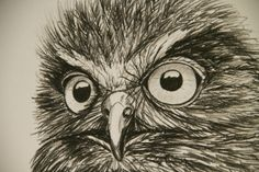 Beautiful charcoal rendition of a moody Morepork | Felt