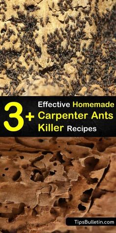 Learn how to get rid of carpenter ants without calling in pest control. Eliminate an ant problem by exterminating the ant colony with DIY insecticides such as boric acid, vinegar, essential oils, and diatomaceous earth. Kill Carpenter Ants, Ant Killer Recipe, Homemade Ant Killer, Natural Insecticide, Natural Pesticides, Ant Remedies, Diy Pest Control, Bug Control