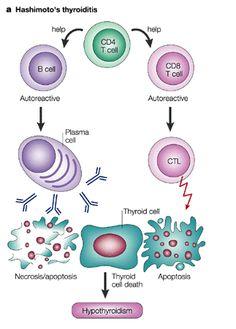 Vitamins for Hoshimoto's Disease