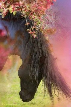 Beautiful horse bowed down with long beautiful mane surrounded by pink flowers and misty pink glow. exposure