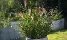 Planters, Herbs, Garden, Pictures, Garten, Planter Boxes, Herb, Plant, Flower Pots