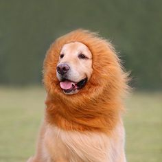 EVINIS Large Pet Dog Cat Lion Wigs Mane Hair Festival Party Fancy Dress Clothes CostumeLion neckerchief Collar Wigs Mane Hair Labrador Golden retriever lanmu ** Details can be found by clicking on the image.