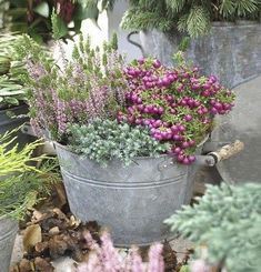 How to Plant Potted Flowers Outdoors in the Soil : Garden Space – Top Soop Container Plants, Container Gardening, Porch Garden, Green Garden, Garden Spaces, Decoration, Flower Power, Fall Decor, Garden Design