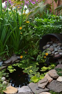 Instead of using grass, the homeowners have a sandy area alongside this small pond and waterfall to create a beach feeling. This is in the Riverside area of Buffalo, NY and was seen during the National Garden Festival in 2013.