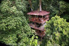 10 casas na árvore ao redor do mundo que vão deixar você impressionado
