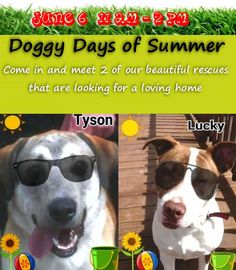 Doggy Days of Summer Adoption Event