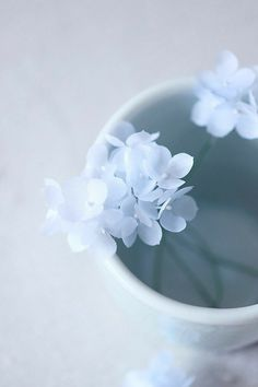 Ideas For Quotes Simple Dainty Aesthetic Colors, Flower Aesthetic, White Aesthetic, Aesthetic Pictures, Flower Background Wallpaper, Flower Backgrounds, Wallpaper Backgrounds, Blue Flowers, Beautiful Flowers