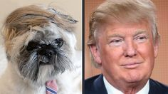 Donald Trump and a Dog that Looks Like Him