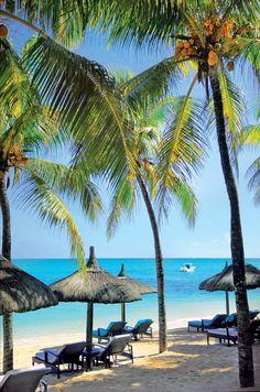 Royal Palm #Mauritius