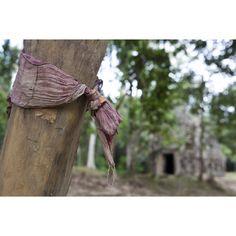 Cloth tied around a tree, Preah Khan Temple, Cambodia