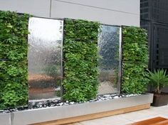 Vertical Green Wall with alternating polished stainless steel water feature. Green Wall sports a variety