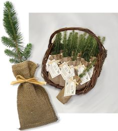 Memorial seedlings. Hand out to friends and family and trees will grow in memory of your loved one.