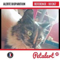 27.08.2016 / Chat / Noisy-le-Sec / Seine-Saint-Denis / France
