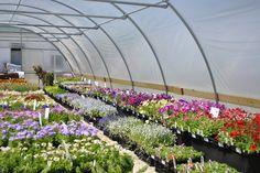 Greenhouse flowers | #starkbros #gardencenter