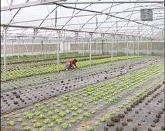 Empresa portuguesa desenvolve plástico biodegradável para agricultura. Silvex é uma das pequenas e médias empresas portuguesas que beneficiou do financiamento de investigação da União Europeia